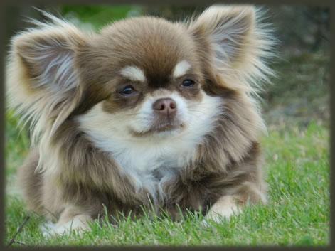 Het mooiste hondenras - pagina 6 | HondenForum